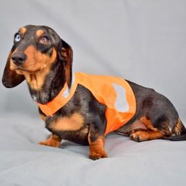 Fényvisszaverős kutyamellény tacsiknak - narancs