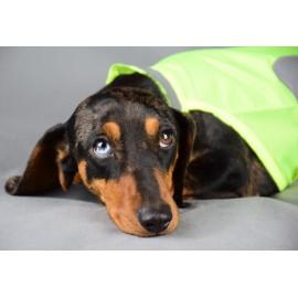 Fényvisszaverős kutyamellény tacsiknak - neonsárga
